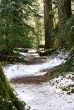 snöig trail för domkyrkadunge Royaltyfri Bild