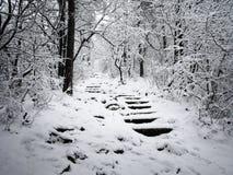 Snöig trappa i skogen Royaltyfri Bild