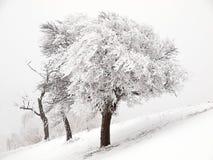 snöig tre trees Arkivbild