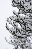 snöig tree Arkivfoto