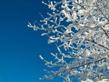 snöig tree Arkivbild