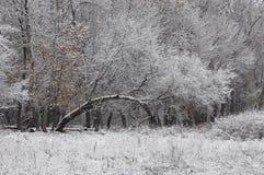 Snöig tree. Arkivfoton