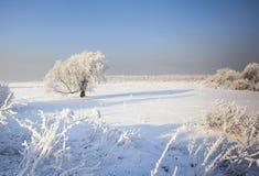 Snöig tree Royaltyfri Fotografi