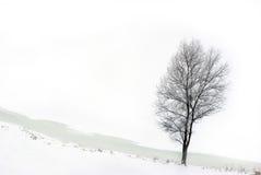 snöig tree Arkivbilder