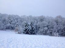 snöig tree Royaltyfri Bild