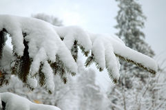 snöig tree för filial royaltyfria foton