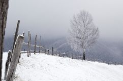 snöig tree Vinterlandskap i Carpatian berg Royaltyfri Foto