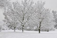 snöig trees Royaltyfri Foto