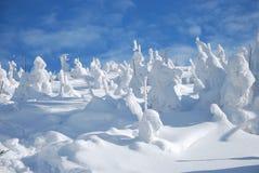 snöig trees arkivbild
