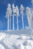 snöig trees royaltyfri bild