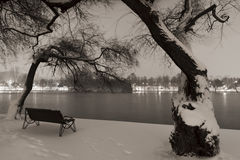 Snöig trees i parkera Royaltyfri Bild