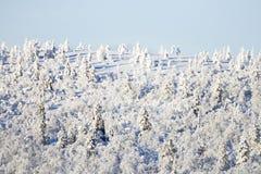 Snöig trees på en back Royaltyfri Fotografi