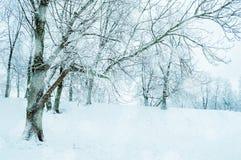 snöig treesvinter för liggande  royaltyfria foton