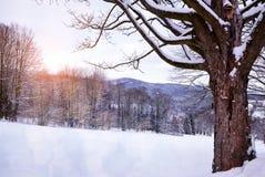 snöig treevinter för liggande Arkivbilder