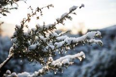 snöig underbart Arkivbilder
