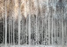 Snöig utslagsplatser i rad Royaltyfri Fotografi
