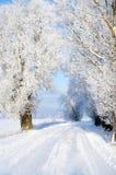 snöig väg Arkivfoton