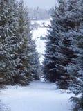Snöig väg för vinterbergskog arkivbilder