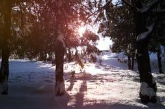 Snöig väg i den Abovyan staden i vinter Arkivbild