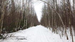 Snöig väg i en vinterbjörkdunge arkivfilmer