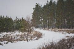 Snöig väg i skogen 6204 Arkivfoto
