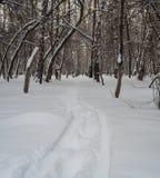 Snöig väg som leder till en skog i Novosibirsk, Ryssland arkivfoto