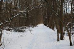 Snöig väg som omges av en skog Royaltyfri Foto