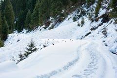 Snöig väg till och med granskog arkivbilder