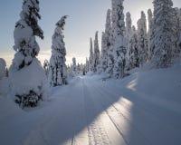 Snöig väg till och med skog med snövesslaspår i en ljus vinterdag Royaltyfri Bild