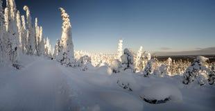 Snöig väg till och med skog med snövesslaspår i en ljus vinterdag Royaltyfria Foton