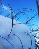 Snöig växt Arkivbild