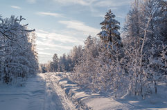 snöig vandringsledskog Royaltyfri Fotografi