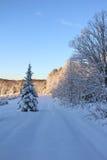 Snöig Vermont julgranlantgård Arkivbilder