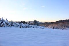 Snöig Vermont julgranlantgård Royaltyfri Fotografi