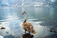 snöig vinter Österrike för kallt berg Royaltyfri Fotografi