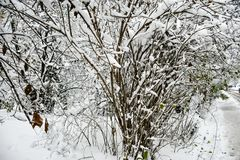 Snöig vinter fotografering för bildbyråer