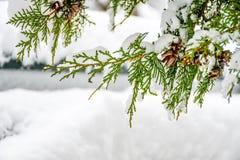 Snöig vinter arkivfoto