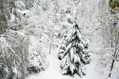 Snöig vinter arkivbilder