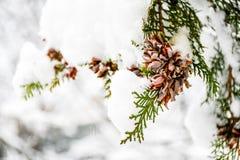 Snöig vinter royaltyfri fotografi