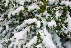 Snöig vinter Bush Royaltyfria Bilder