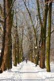 snöig vinter för liggande royaltyfria bilder