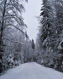snöig vinter för skog arkivfoton
