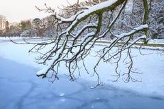 Snöig vinter i parkera Royaltyfri Bild