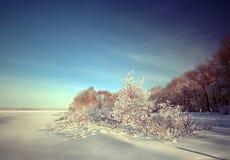 Frostig vinterdag Arkivbilder