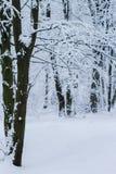 Snöig vinterlandskap av den vita frostiga skogen Fotografering för Bildbyråer