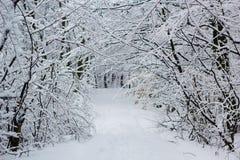 Snöig vinterlandskap av den vita frostiga skogen Arkivbild