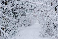 Snöig vinterlandskap av den vita frostiga skogen Royaltyfri Fotografi