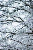 Snöig vinterlandskap av den vita frostiga skogen Royaltyfri Bild