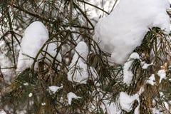 Snöig vinterskog arkivfoto