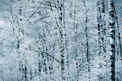 Snöig vinterskog Royaltyfri Foto